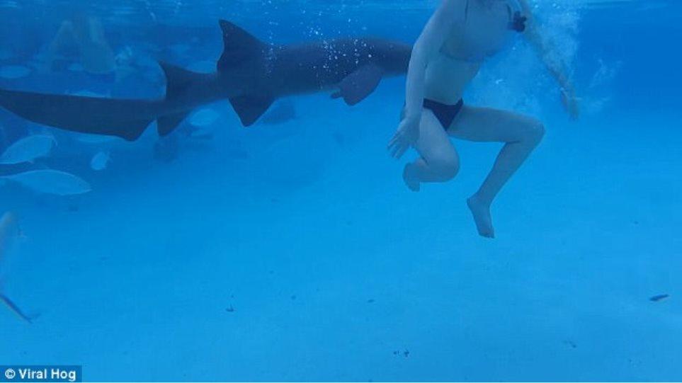 Τρομακτικό βίντεο: Νεόνυμφη δέχεται επίθεση από καρχαρία στην Καραΐβική