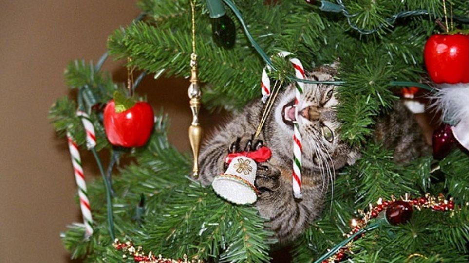 Μοναδικές φωτογραφίες: Όταν οι γάτες και οι σκύλοι καταστρέφουν τα Χριστούγεννά μας