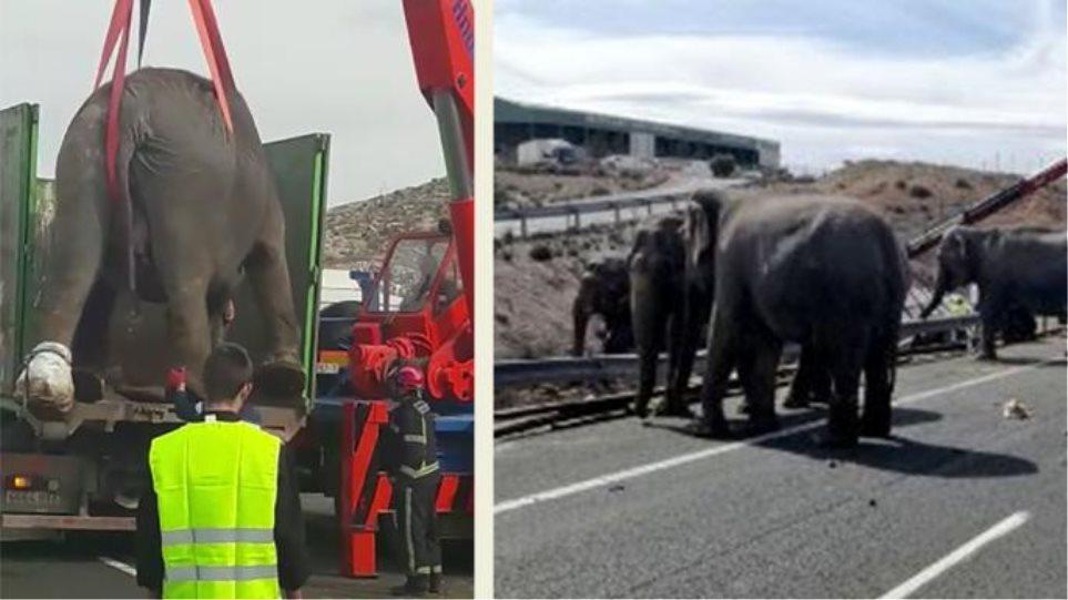 Elephants_spain_1