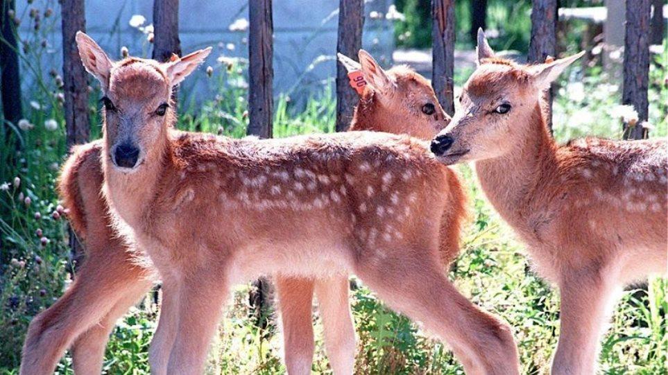 pere_deer