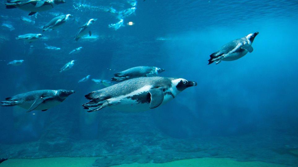 penguin-3252090_1920