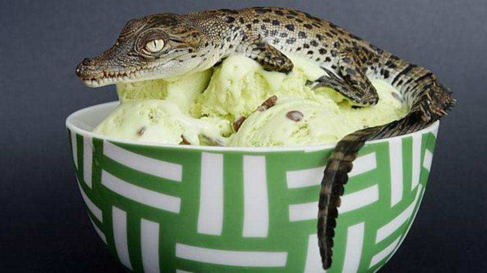crocodile-icecreamedited