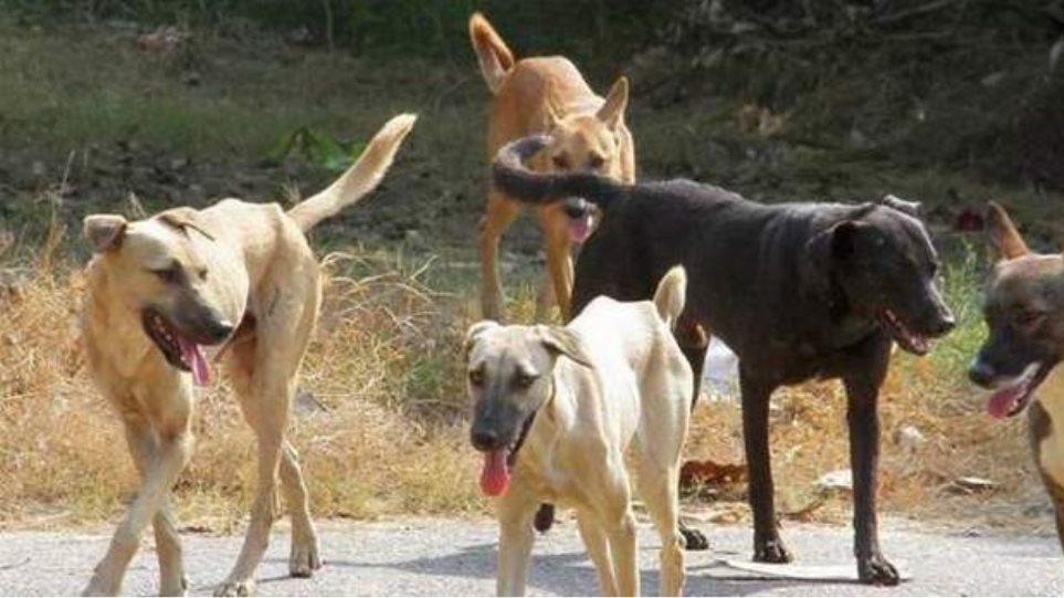 Αδέσποτα σκυλιά επιτέθηκαν σε νεαρή δρομέα στο Βόλο