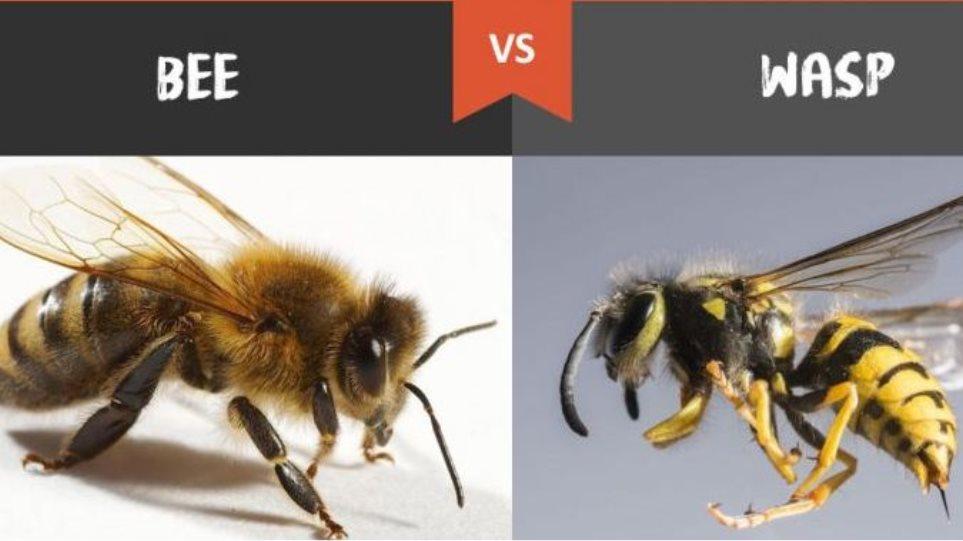 bee-wasp