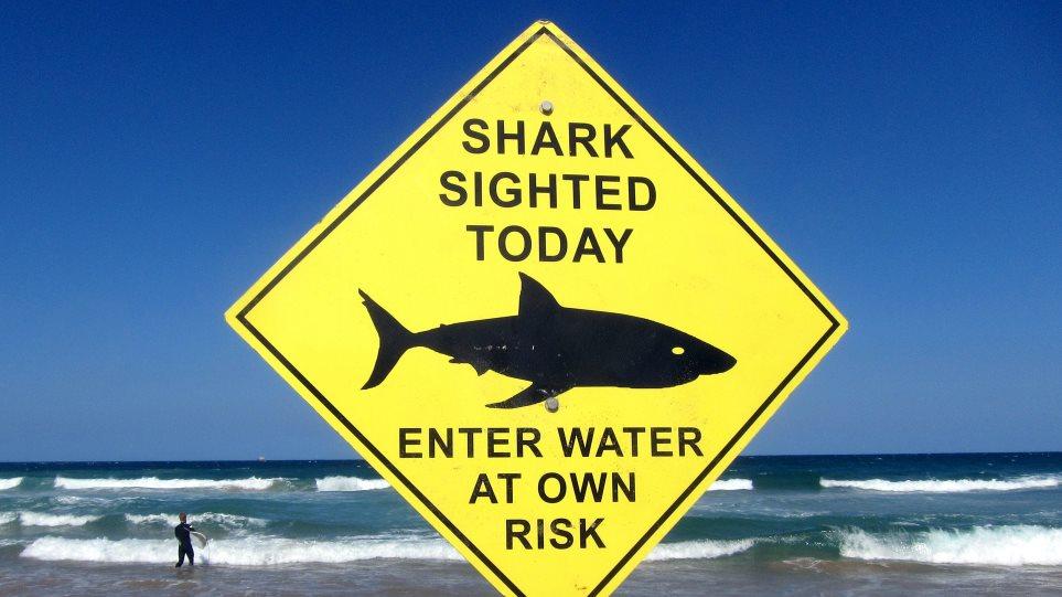 shark_09
