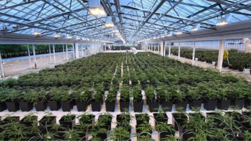 aphria-medical-marijuana-inspection