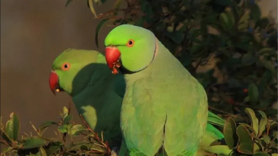 Μεγάλη ταινία πουλί Κατεβάστε