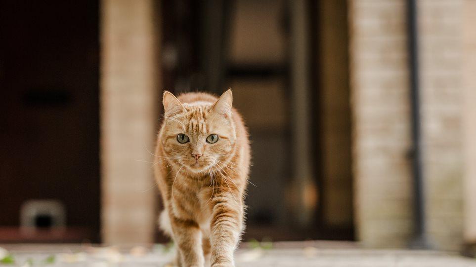 5053617624a9 Κτηνωδία στο Βόλο  Κρέμασαν γάτα από τα κάγκελα σπιτιού