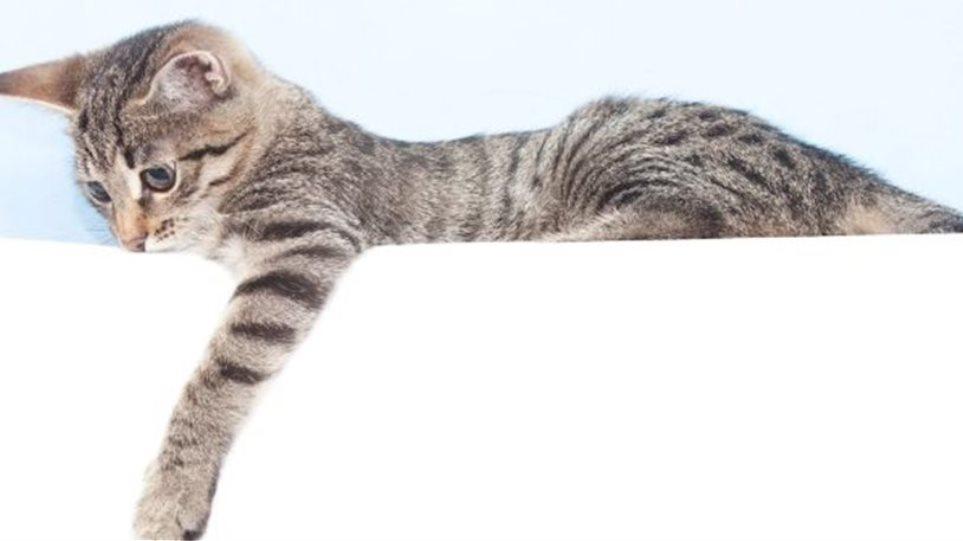Αν έχετε γάτα μπορεί και να σας ενδιαφέρει αυτή η μελέτη...