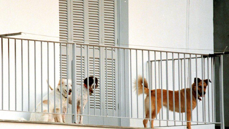 Κακοποίηση ζώων: Τι συνέβη με ασυνείδητο που είχε εγκαταλείψει σκύλο σε μπαλκόνι διαμερίσματος