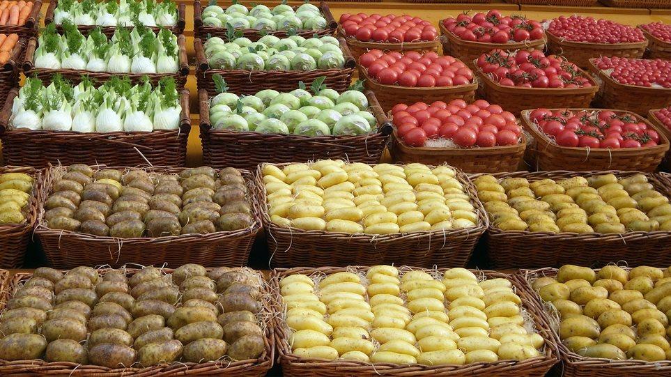 patates_main01