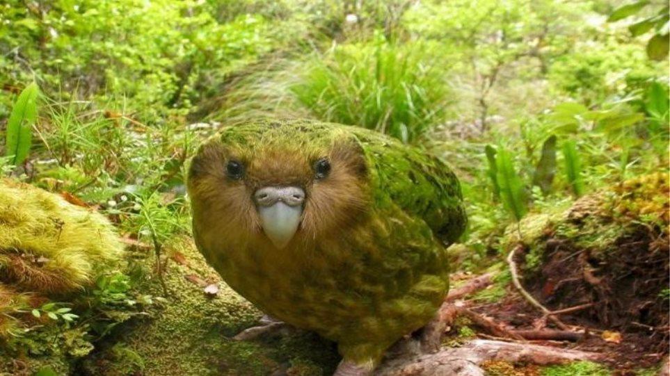Μεγάλο πουλί αφθονία