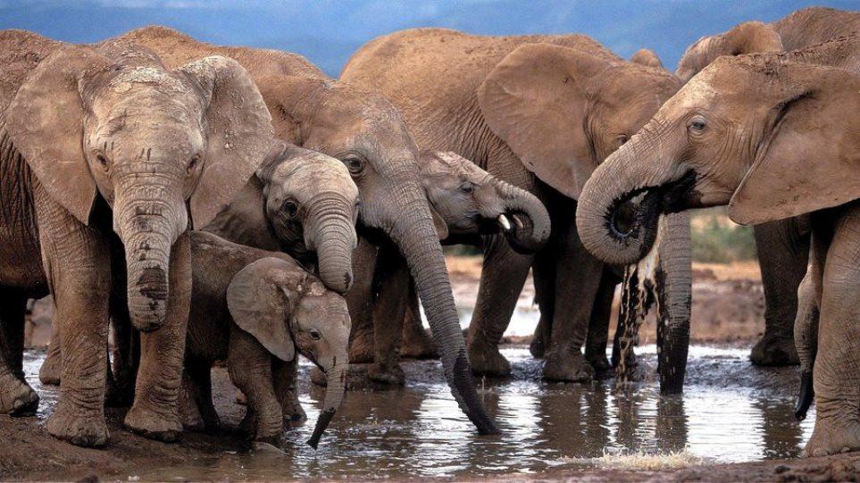 elephants__2_