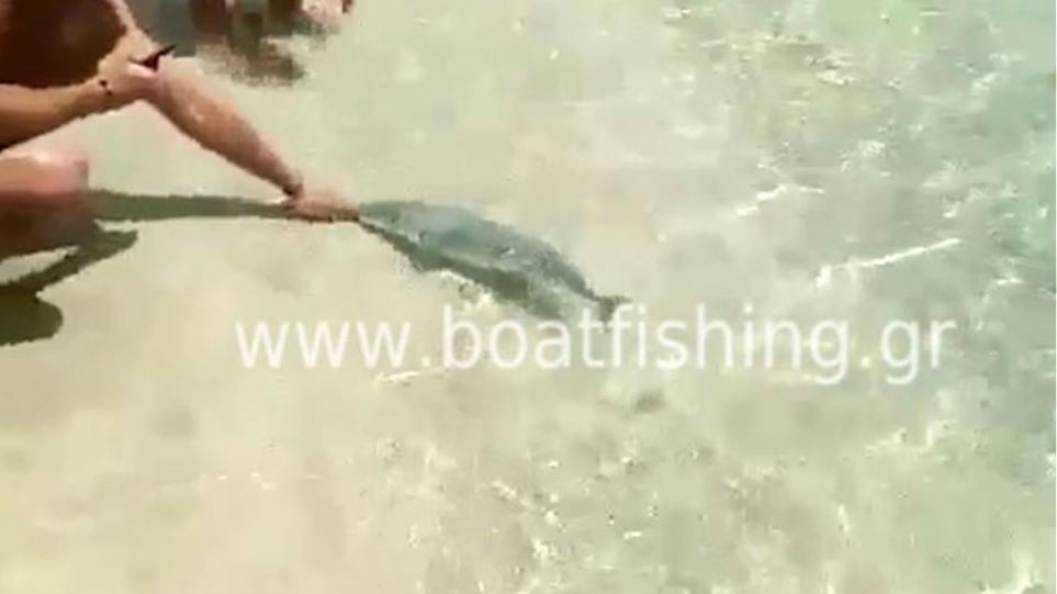 πολλά ψάρια ραντεβού σύνδεση site Σικάγο περιοχές dating περιοχή