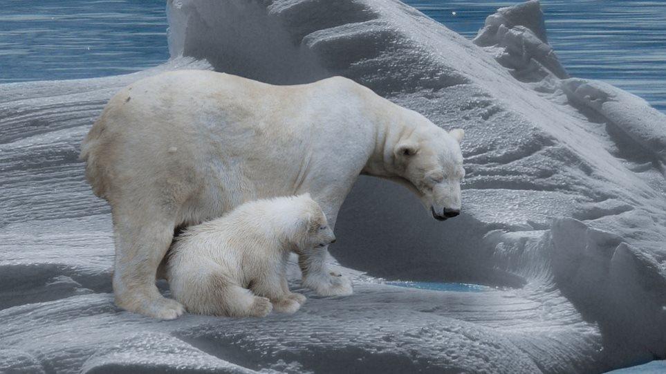 klimatiki-allagi-polar-bear