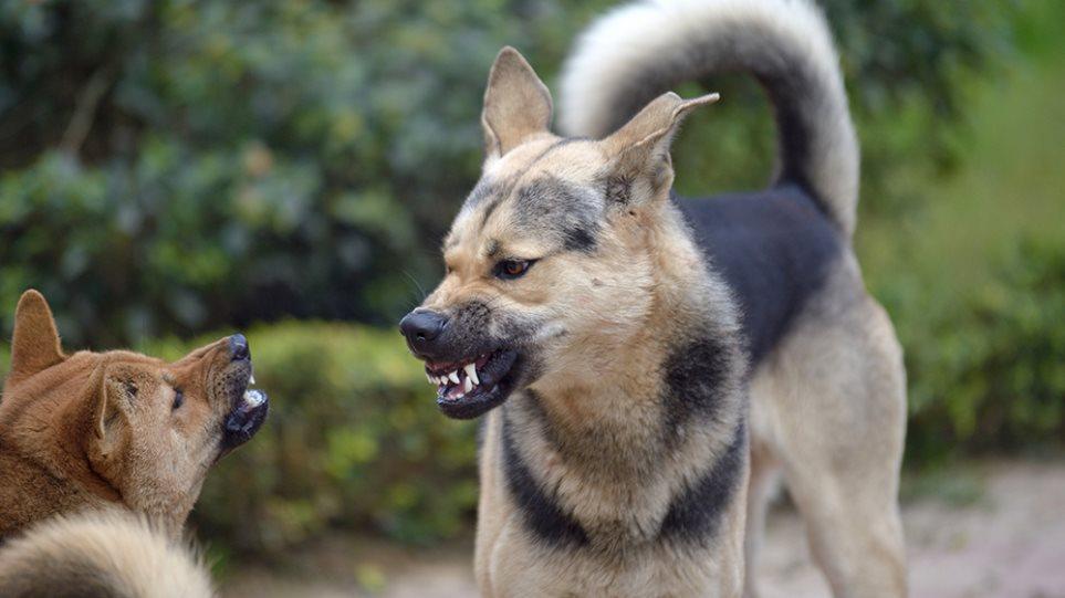 dangerous_dog