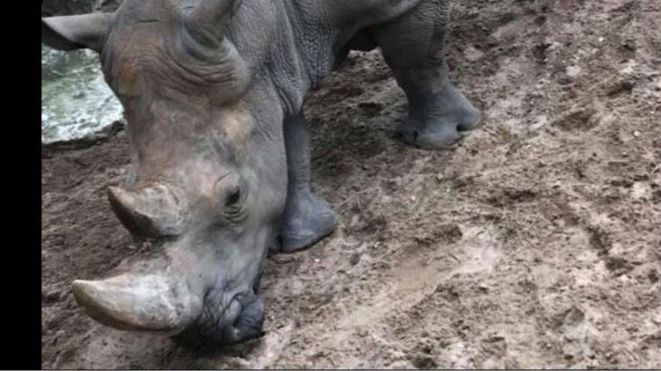 rinokeros-zoo-ekso