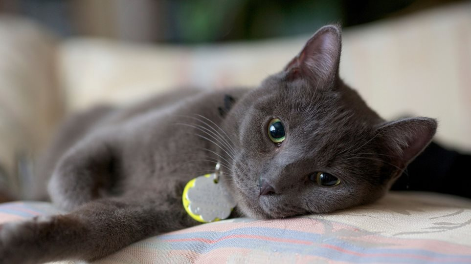 cat-217679
