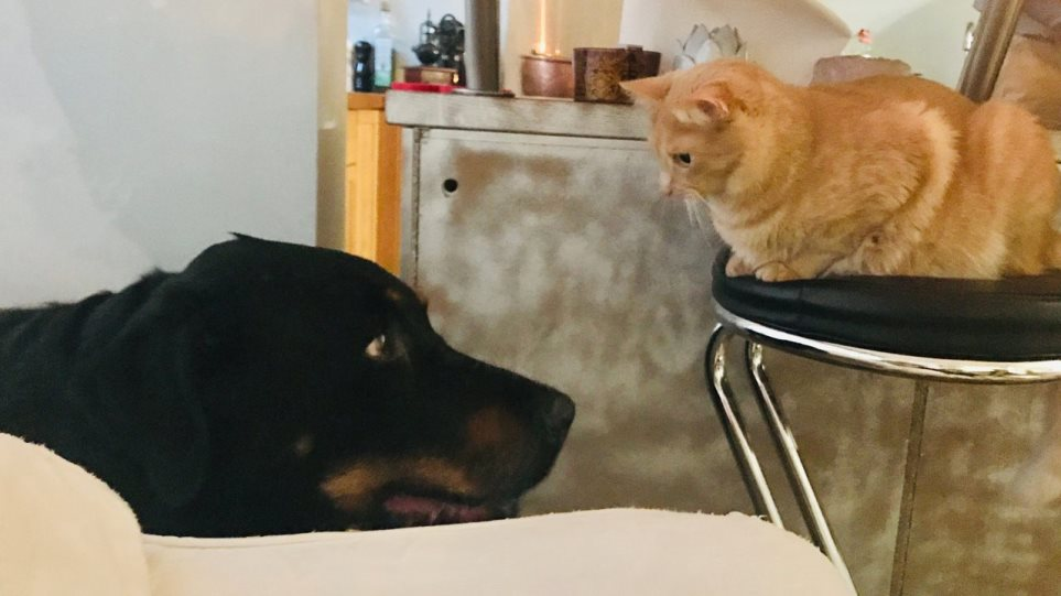 200403163459_cat-and-dog-1280x720
