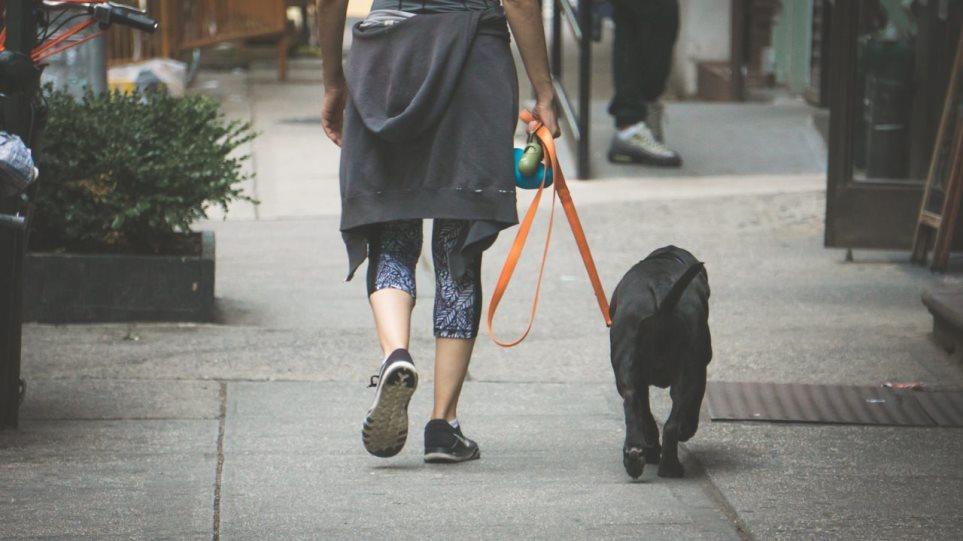 200407110555_dog-walk-1280x720