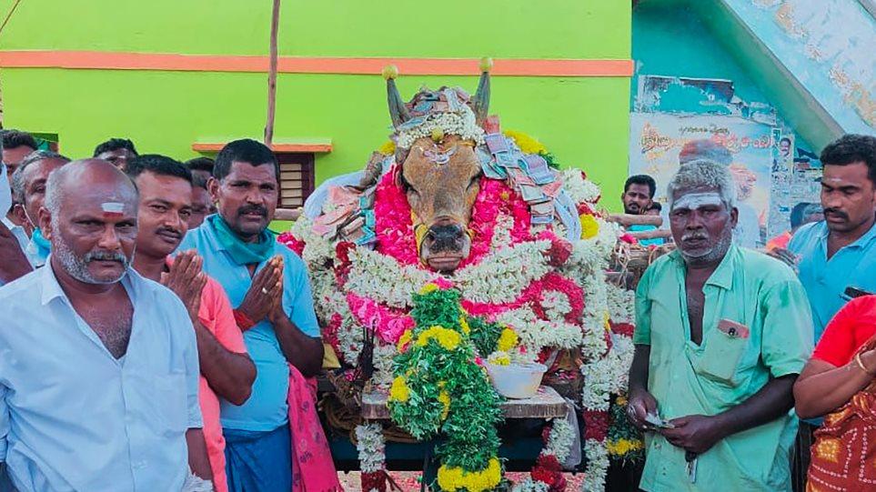 india-bull
