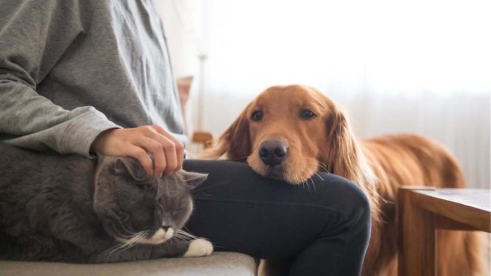 catdogDimos