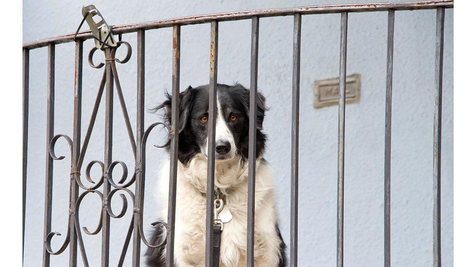 200626133521_dogporch