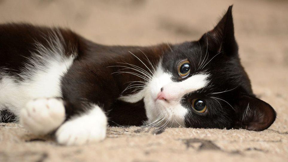 190924120332_cat-1280x720