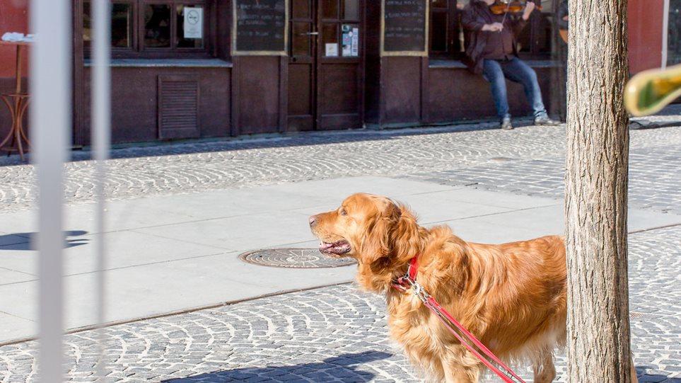 200803144641_dogparking3