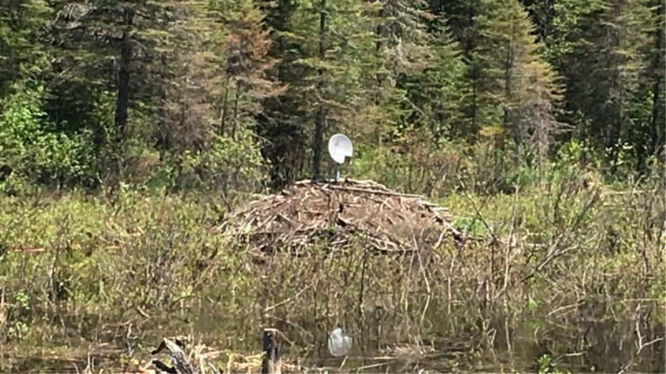 beavers-with-satellite