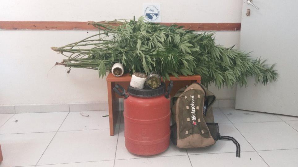 Thesprwtia-xasisodentra-barka