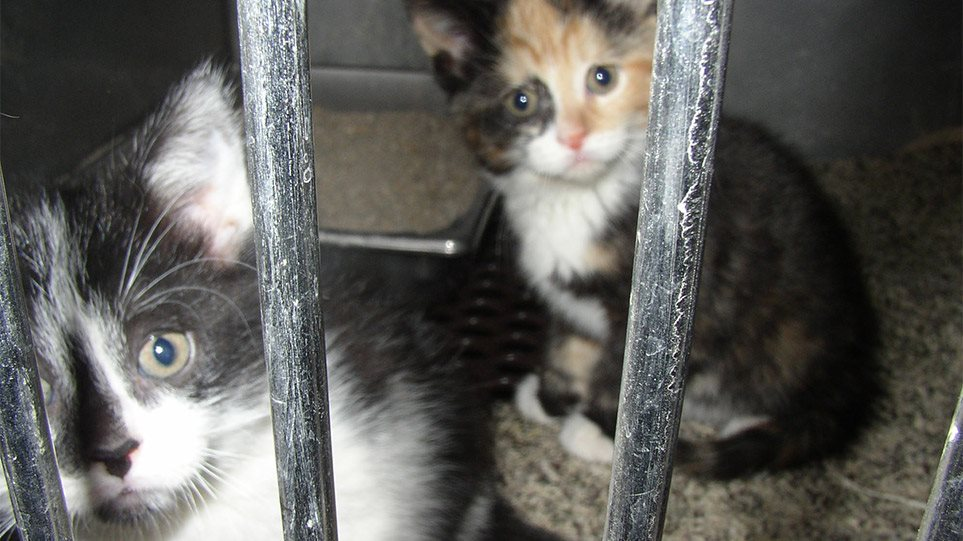 kittens-at-shelter_mini