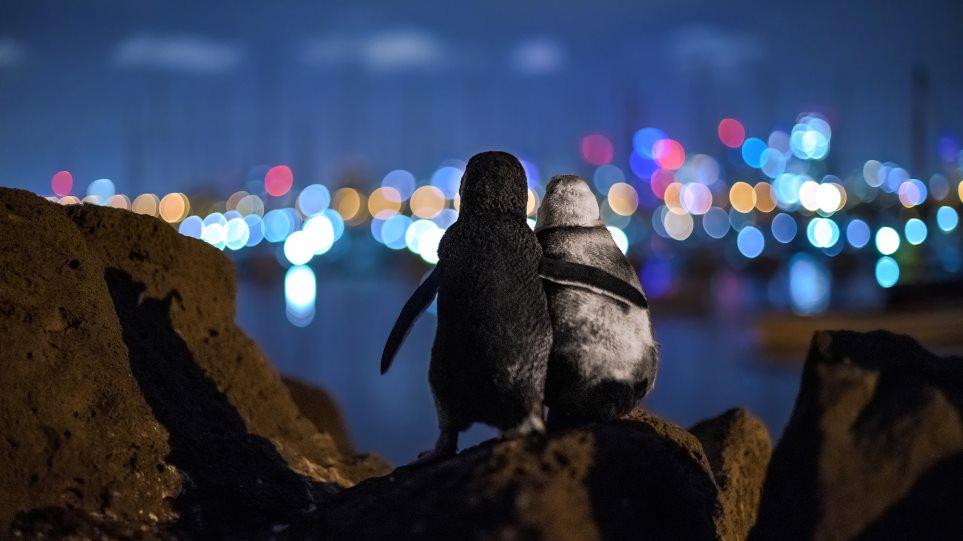 2020-ocean-photography-awards_pingvin