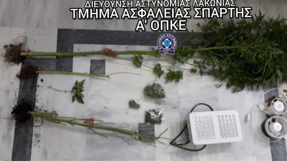 Sparti-xasisodentra
