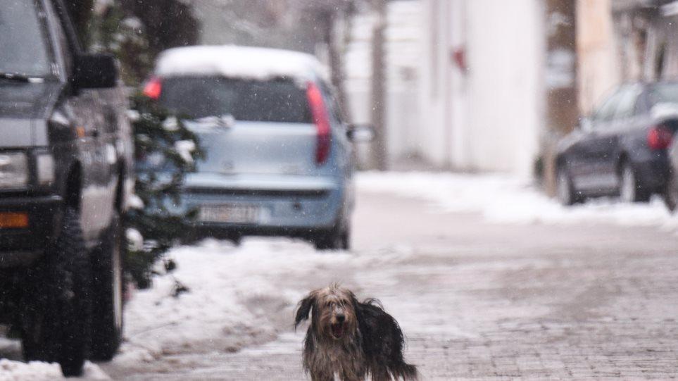 χιονια_σκυλος