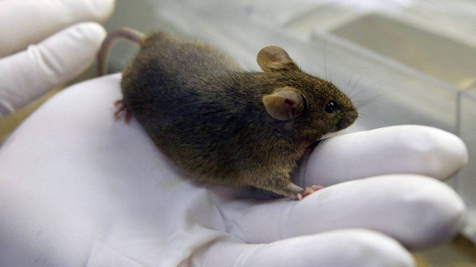 mouse_lab
