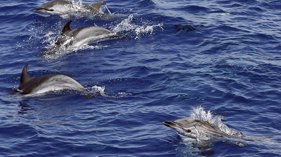 delfinia_art