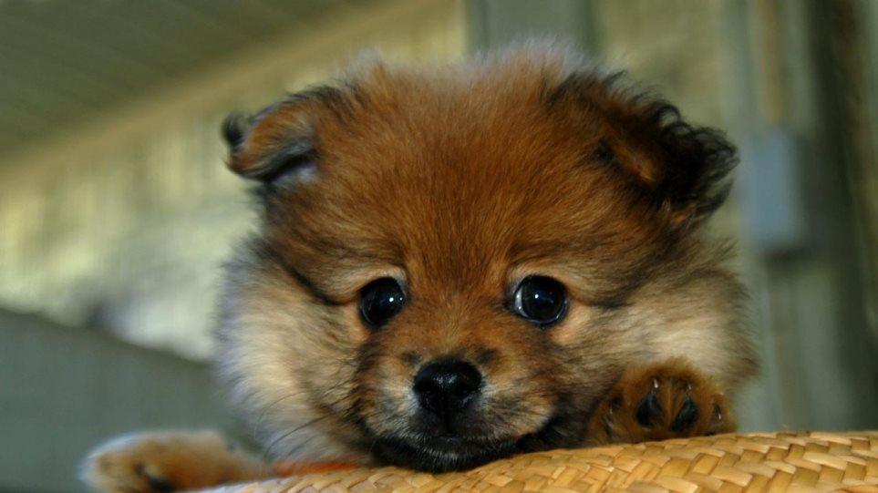 210304155056_puppies-15-1280x794