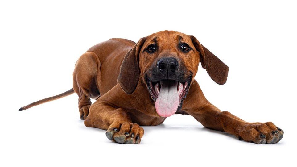 210309160613_puppie-15