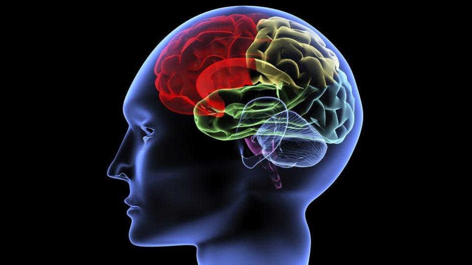 brain-1280x720