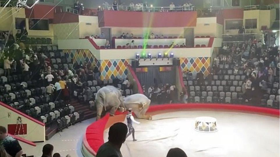 ρωσια_ελεφαντες