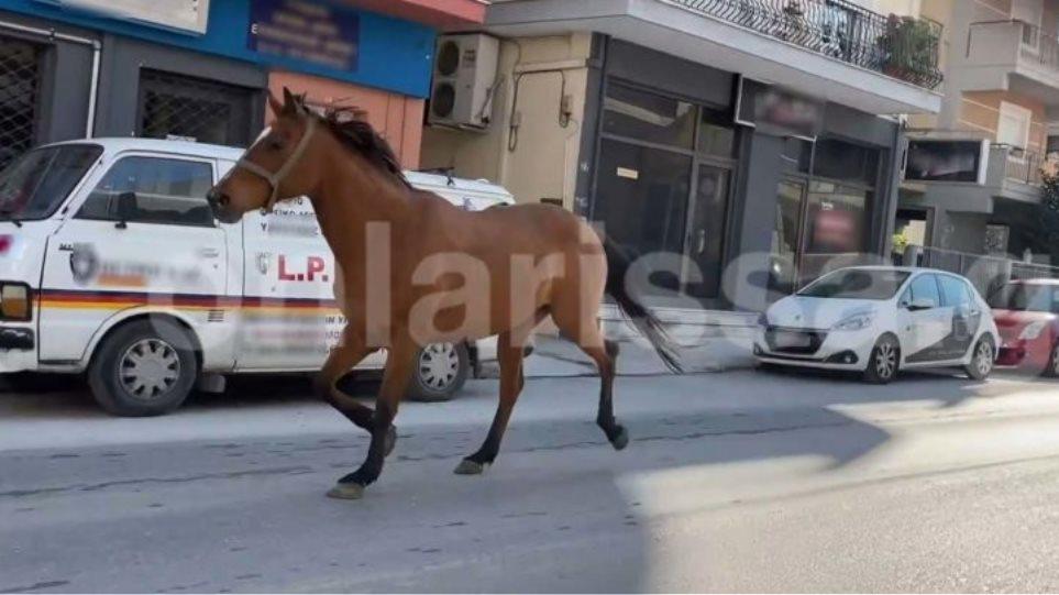 αλογο-780x405