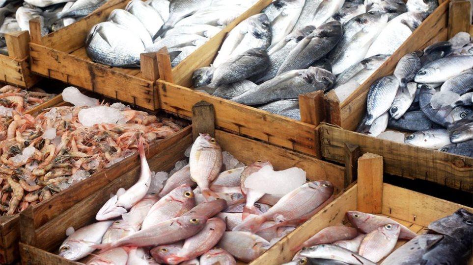 fishmarket_large