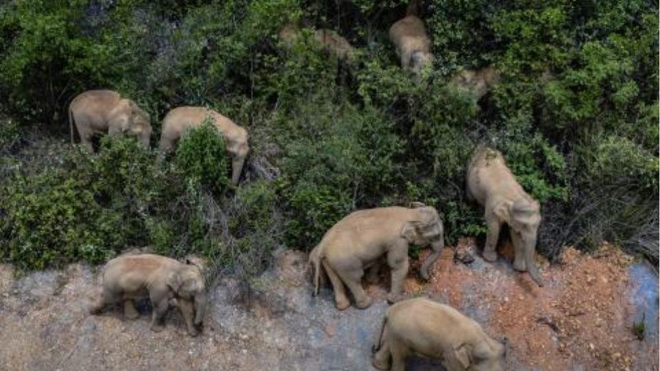 kina_elefantes
