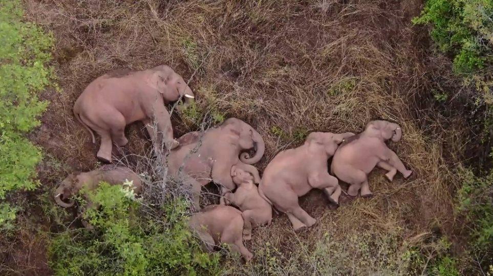 elephants_ekso