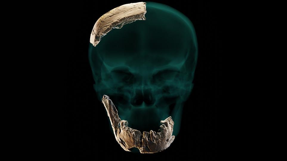 σκελετος-αρθρο