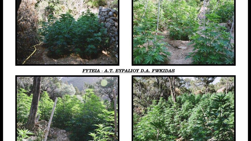 Fwkida-xasisofyteia2_2