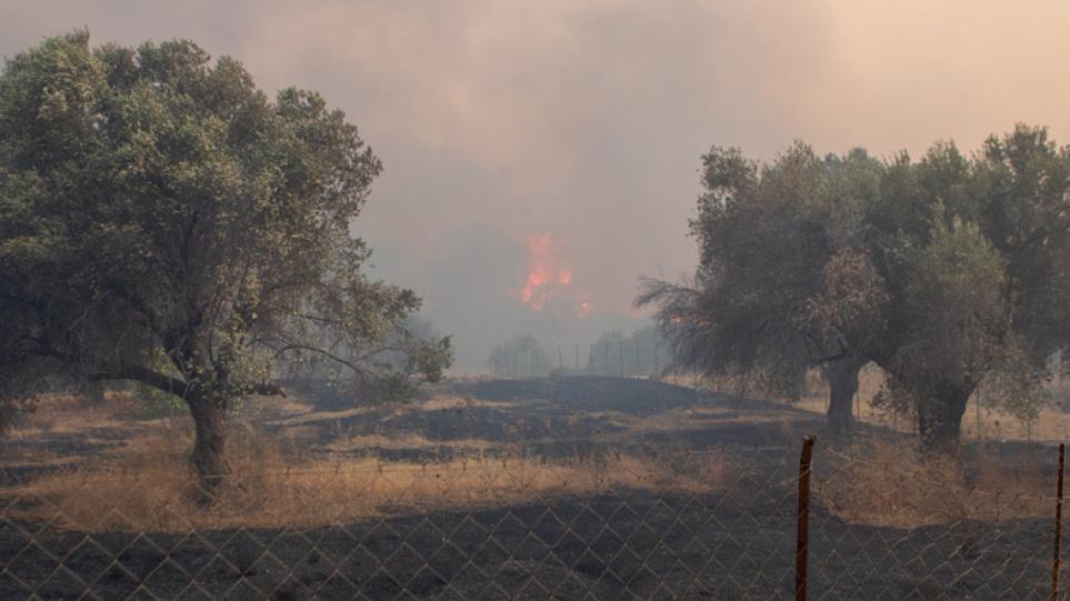 Φωτιά στη Ρόδο: Σε ύφεση όλα τα μέτωπα - Εκτιμήσεις ότι κάηκαν 7000  στρέμματα