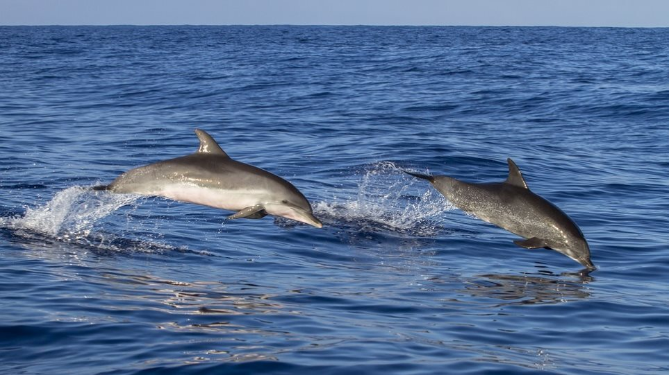 dolphins-pic-sea