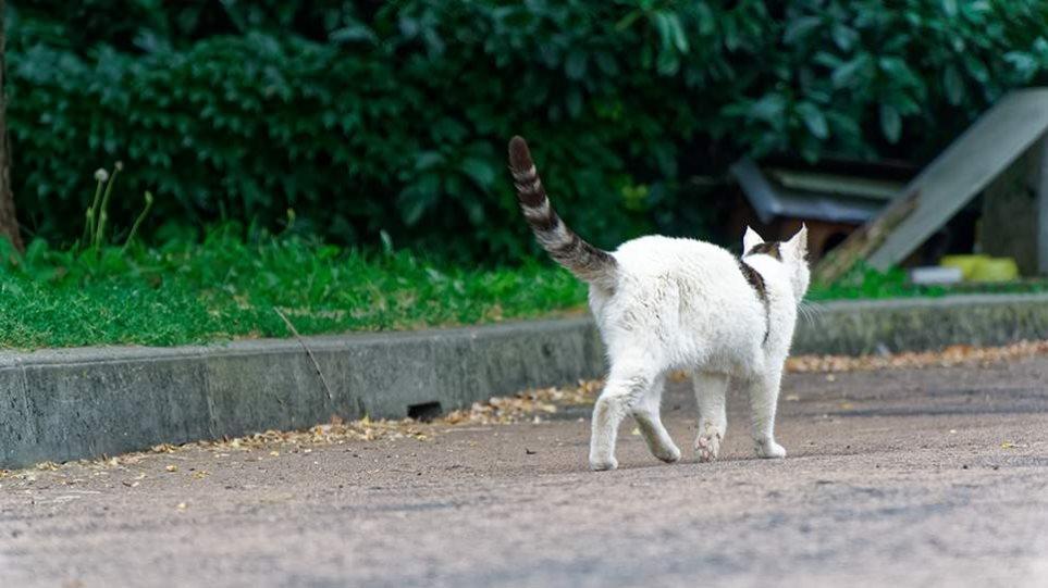 cat-thumb-large